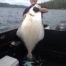 A HUGE Halibut caught in the waters of Ketchikan