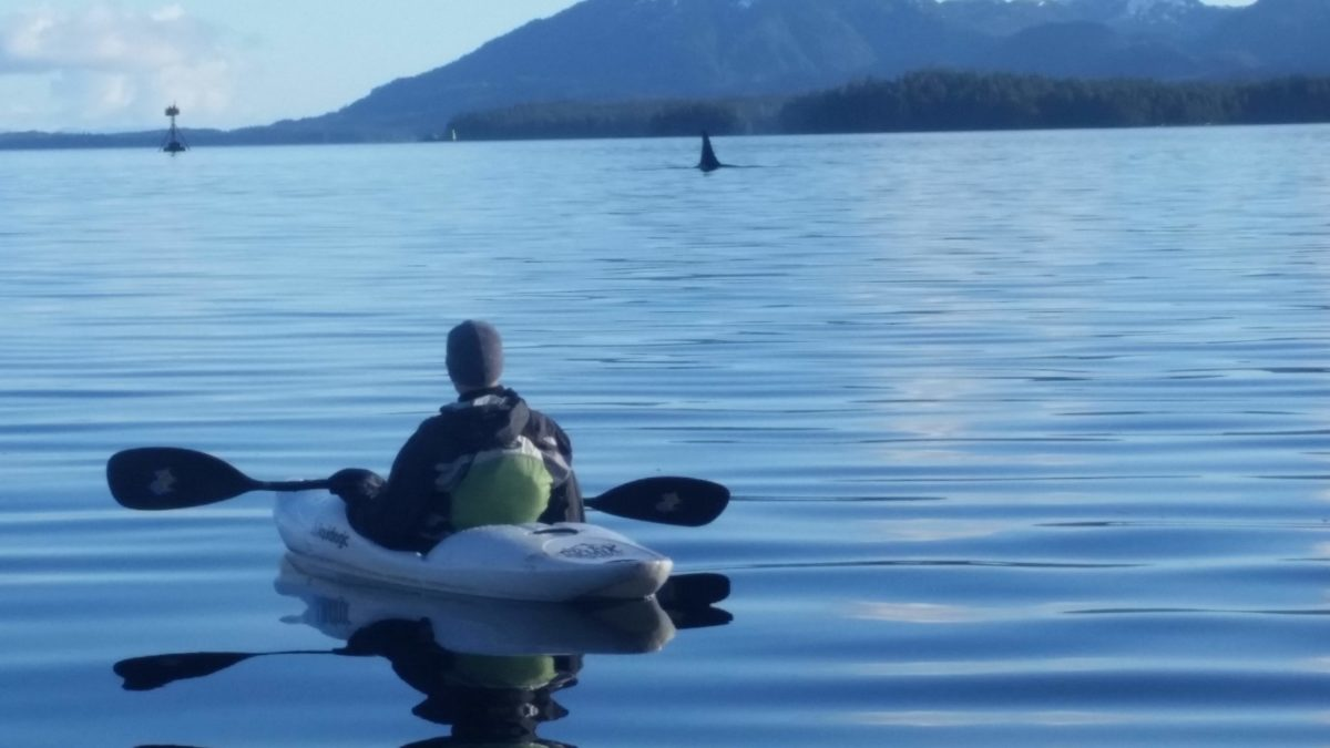 Man kayaking with orca